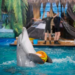Дельфинарии, океанариумы Черкизово