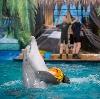 Дельфинарии, океанариумы в Черкизово