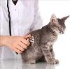 Ветеринарные клиники в Черкизово